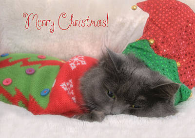 Photograph - Christmas Elf Cat by Joann Vitali