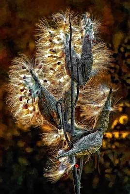 Common Milkweed Photograph - Christmas Floozy by Steve Harrington