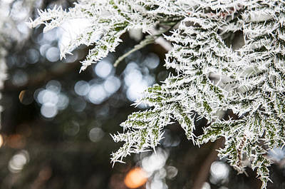 Art Print featuring the photograph Christmas Frost by David Isaacson