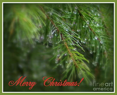 Photograph - Christmas Greenery by Leone Lund
