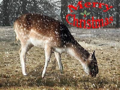 Dunham Massey Photograph - Christmas Greeting by Susan Tinsley
