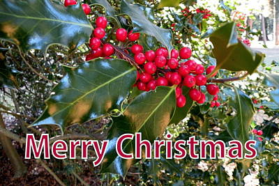 Photograph - Christmas Holly by Brian Chase