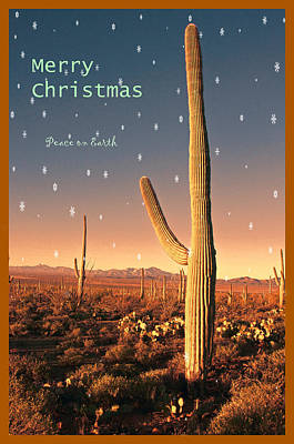 Photograph - Christmas In The Desert by Barbara Manis