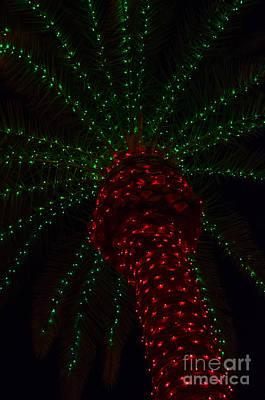 Photograph - Christmas In The Desert by Tamara Becker