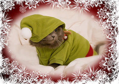 Photograph - Christmas Kitty by Joann Vitali