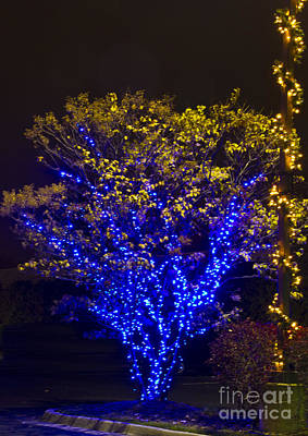 Photograph - Christmas Light Series No 1  Blue And Yellow by Bill Woodstock