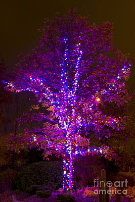 Photograph - Christmas Light Series No 4  Purple Haze by Bill Woodstock