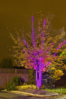 Photograph - Christmas Light Series No 6  Pink And Yellow by Bill Woodstock