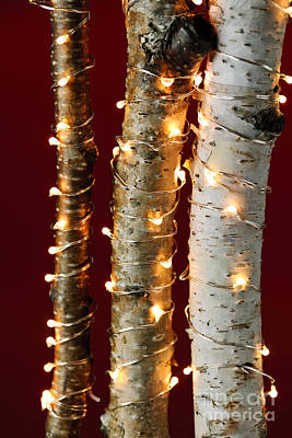 Winter Light Photograph - Christmas Lights On Birch Branches by Elena Elisseeva