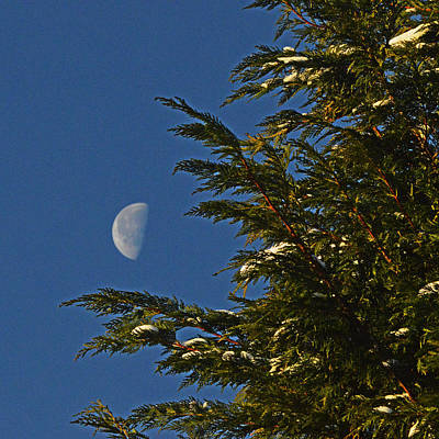 Photograph - Christmas Moon Tree by Bill Swartwout