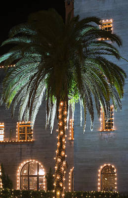 Christmas Holiday Scenery Photograph - Christmas Palm by Kenneth Albin