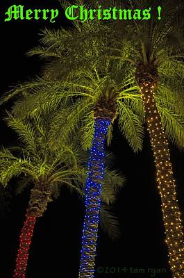 Photograph - Christmas Palms Message by Tam Ryan