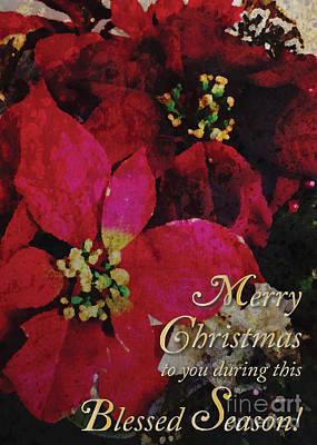 Photograph - Christmas Poinsettia by Cheryl McClure