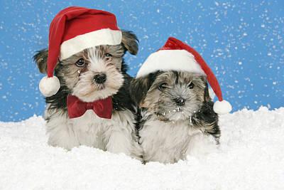 Manipulated Digital Photograph - Christmas Puppies by John Daniels