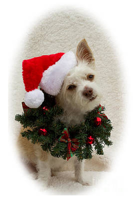 Photograph - Christmas Puppy by Photography by Laura Lee