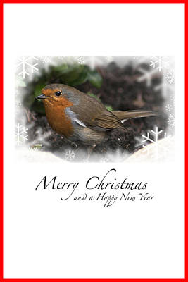 Photograph - Christmas Robin by Steve Purnell