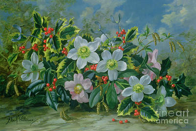 Christmas Roses And Holly Art Print by Albert Williams