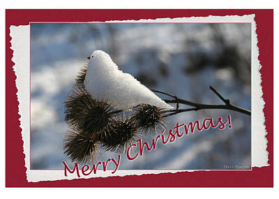 Photograph - Christmas Snow Bird by Terri Harper