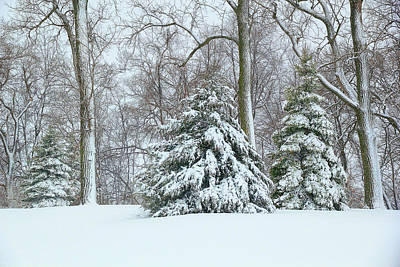 Photograph - Christmas Snow by Deb Buchanan