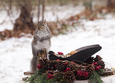 Christmas Squirrel Art Print
