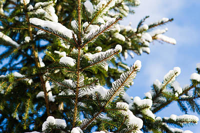 David Bowie - Christmas Tree 6 by Alexander Senin