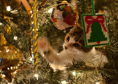 Photograph - Christmas Tree Cat by Dan McManus
