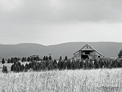 Photograph - Christmas Tree Farm - Bw by Eve Spring