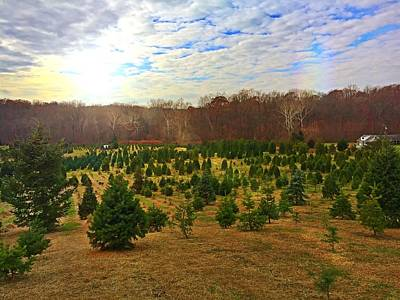 Photograph - Christmas Tree Farm by Chris Montcalmo