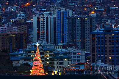 Christmas Tree In La Paz Art Print