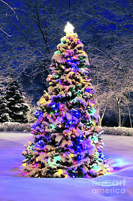 Snowy Night Photograph - Christmas Tree In Snow by Elena Elisseeva