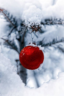 Snow Covered Photograph - Christmas Tree by Joana Kruse