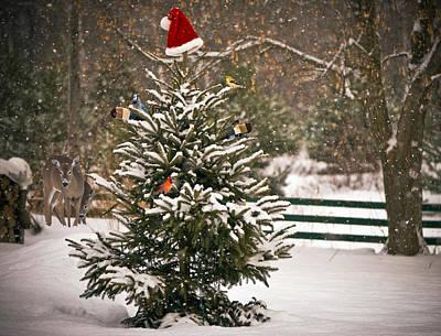 Chickadee Family Photograph - Christmas Tree. by Kelly Nelson