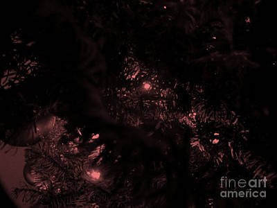 Photograph - Christmas Tree Series 1 by Serena Ballard
