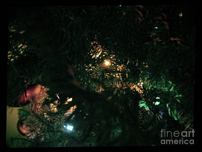 Photograph - Christmas Tree Series 9 by Serena Ballard