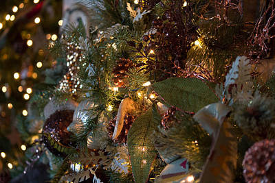Photograph - Christmas Tree Splendor by Patricia Babbitt