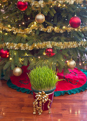 Photograph - Christmas Wheat Under Xmas Tree by Brch Photography