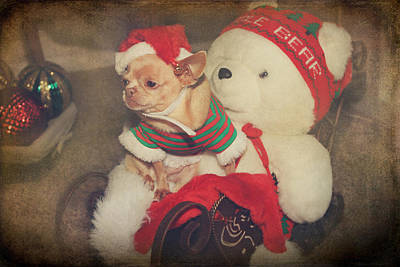 Photograph - Christmas Zoe by Laurie Search