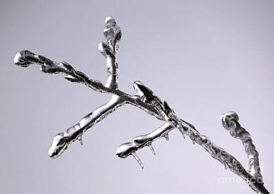 Photograph - Chrome Twig by Tom Brickhouse