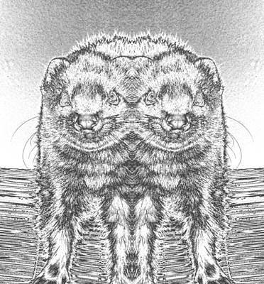 Photograph - Chromed Ferrets  by Belinda Lee