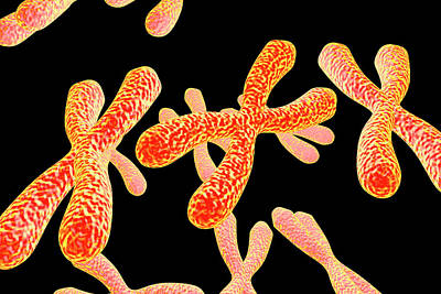 Chromosomes Art Print