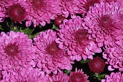 Photograph - Chrysanthemum 2 by Bj Hodges