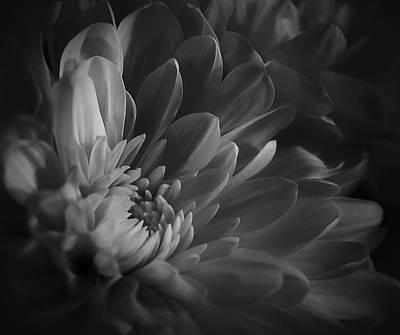 Photograph - Chrysanthemum - 4 by Susan  McMenamin