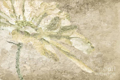 Chrysanthemums Painting - Chrysanthemum Abstract by John Edwards
