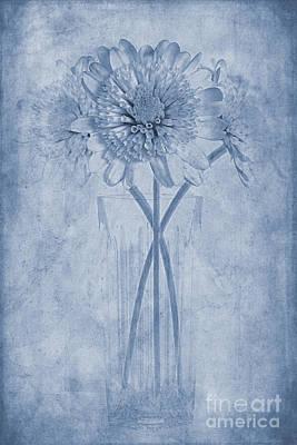 Blooming Digital Art - Chrysanthemum Cyanotype by John Edwards