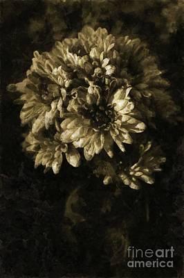 Chrysanthemum Art Print by Dariusz Gudowicz