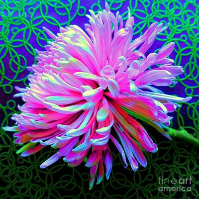 Photograph - Chrysanthemum De Colores by Barbie Corbett-Newmin