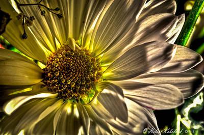 Chrysanthemum Art Print by Helene Kobelnyk