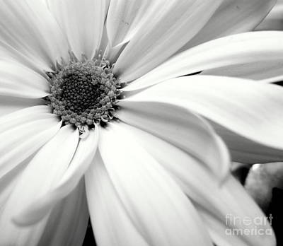 Photograph - Chrysanthemum In Black And White by Ioanna Papanikolaou