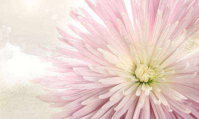 Photograph - Chrysanthemum by Karen Lynch