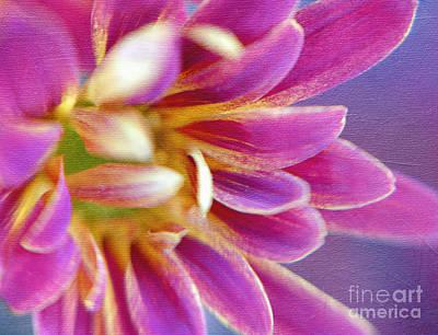 Pinks And Purple Petals Photograph - Chrysanthemum Painting by Irina Wardas